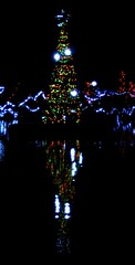 Christmas Tree in the Duck Pond