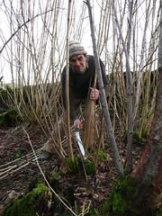 cutting hazel rods