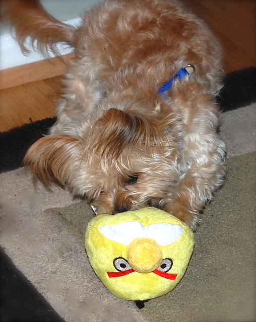 Yum! Angry Birds dog toy