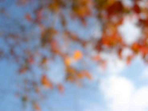Auspices of Autumn by Jason A. Samfield