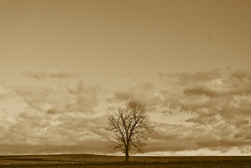Solitary Tree by kentmastdigital