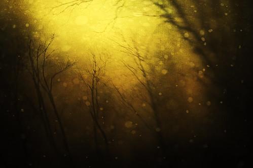 Starry Starry Winter's  Night by jumpinjimmyjava