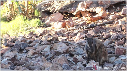 Outback Wildlife (11 of 15)