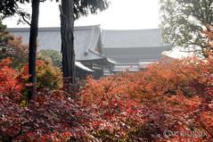 Tofukuji Temple 東福寺