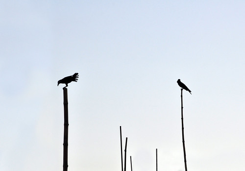 দুই পাখি..