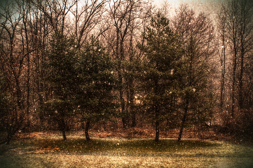 Snow begins to fall by dogfrog