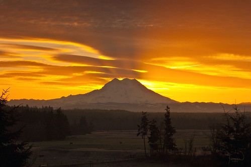 Mt Rainier from Cook Road