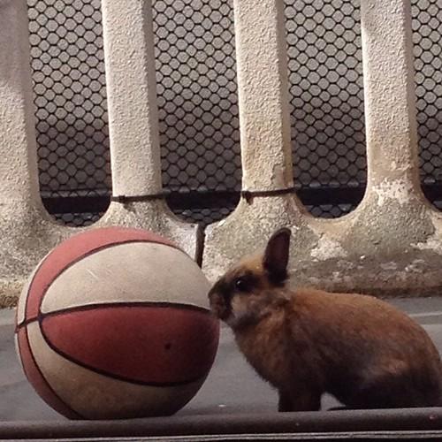Anche i conigli giocano a basket in casa Ricci