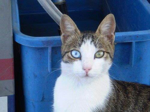 cat with blue and green eyes