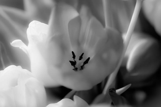 Spring-5886.jpg