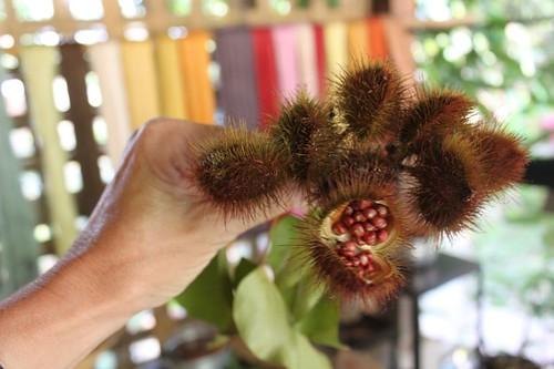 20120129_3017_annato-tree-seeds