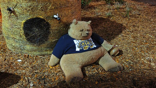 suicidal bear