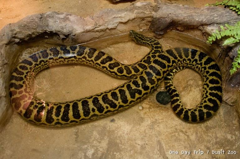 Dusit zoo - งู