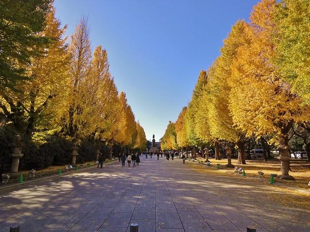 【2020年版】東京でおすすめの紅葉スポット:見頃の時期を紹介 ...