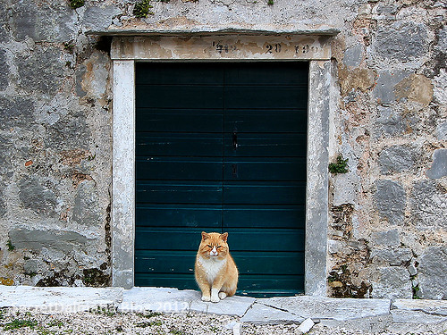 The kingdom of cats