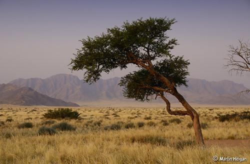 Sossusvlei Landscape by Martin_Heigan