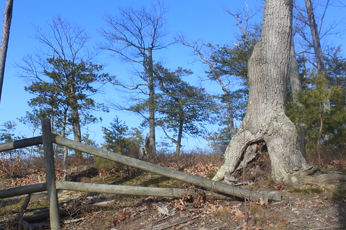 Mason Neck State Park - Bay View Trail - Tree and Fence on Hillside
