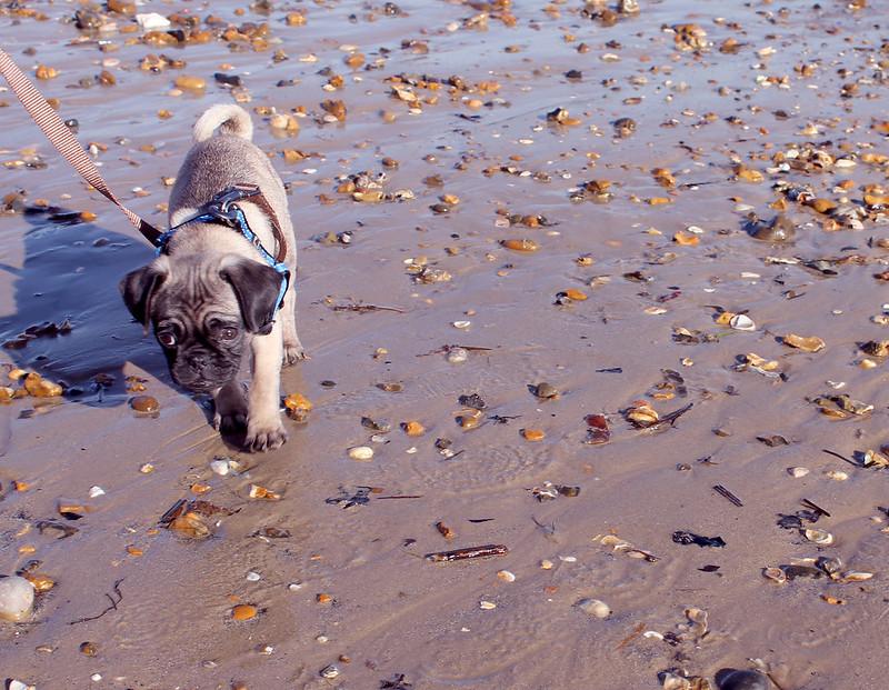 Archie on the beach