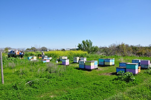 Full shot of the newer hives at the Farm