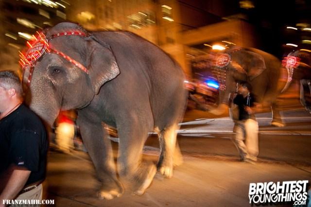12-03_elephants119-124