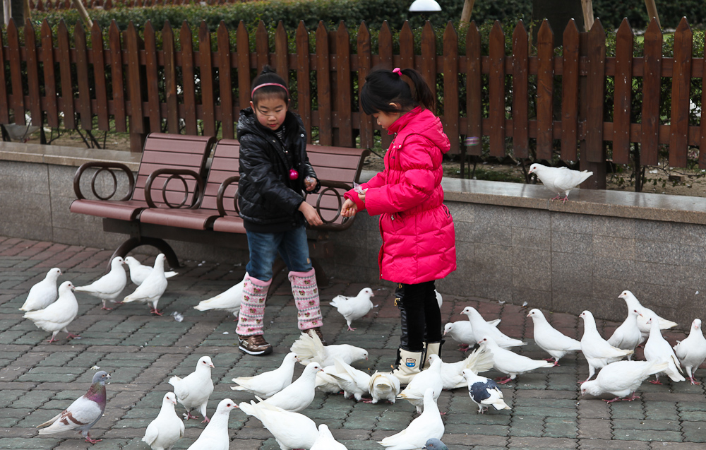 Birds in People's Square