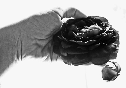 A rose is a rose is a rose by Rossella Sferlazzo