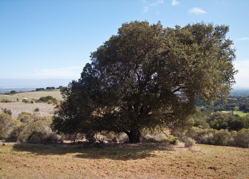 Fremont Older Open Space Preserve