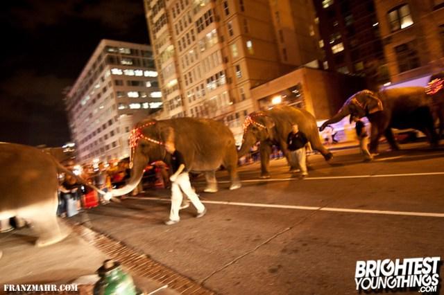 12-03_elephants119-121