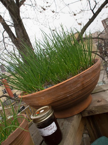 Deck Chives & Maple syrup