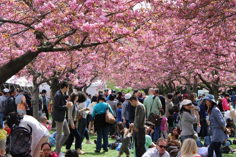 Brooklyn Sakura Matsuri