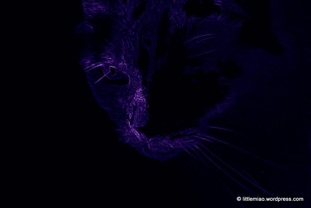 lilac loto 3-19-2012 5-17-11 PM
