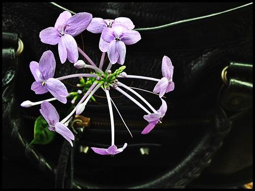 Purple flowers that got stuck in my bag