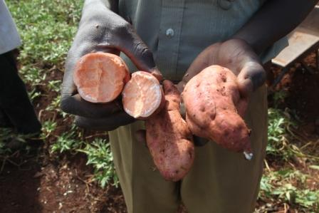 Man holding sweet potatoes
