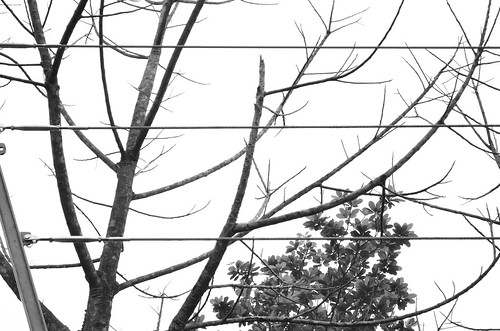 The Trees & The LInes