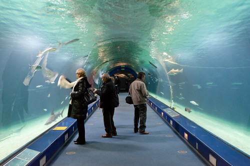 Túnel bajo las aguas