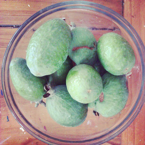 The first feijoas of the tree. #iloveautumn