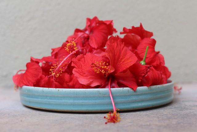 paticheri hibiscus flower syrup (1)