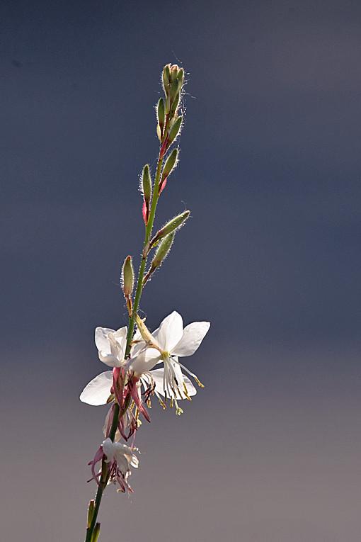 _DSC0913 Flower