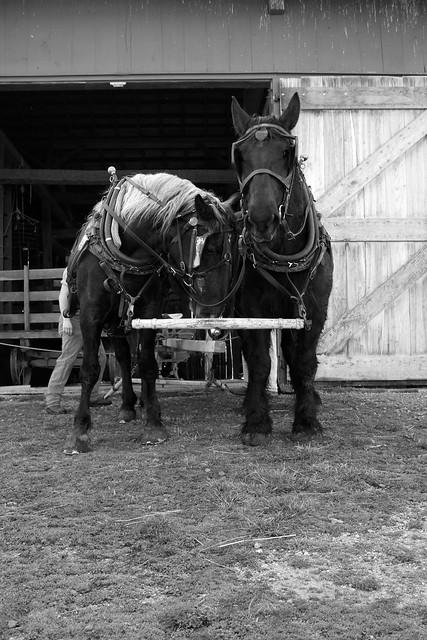 Belle and Duke