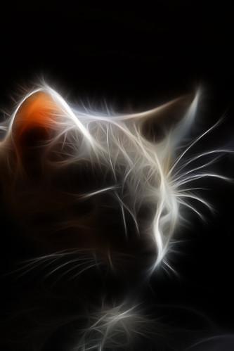 fractal cat /2