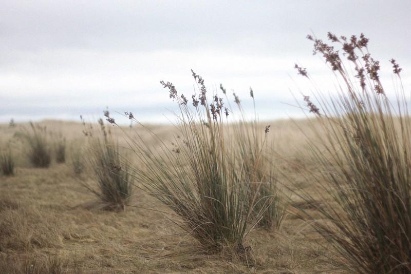 dunes curracloe strand