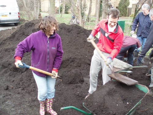 composting the hedge at the Dole in Histon Feb 18th 2012