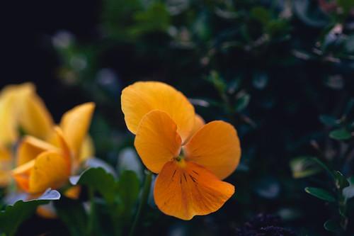flowery stuff 3