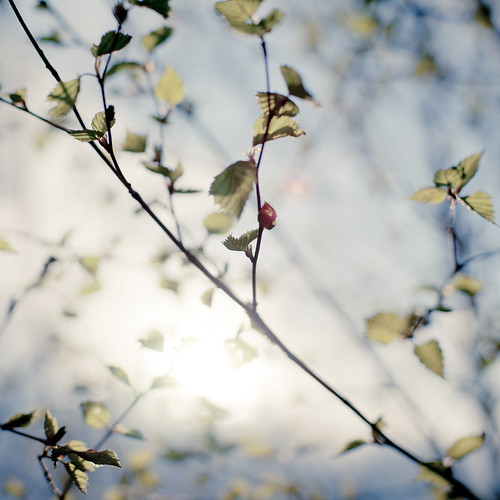 leaves in backlight