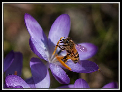 73/366 - It's honey time !!! by Flubie