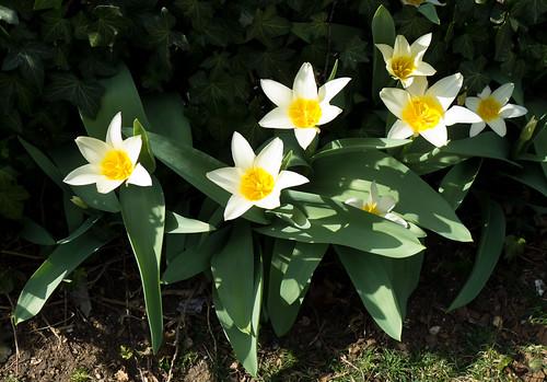 Hagerstown - North End - Trumpower's Garden, 2012
