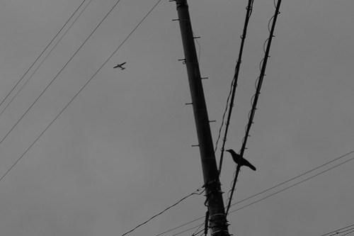 a crow and a plane