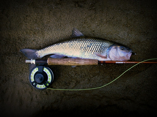 Gunpowder River Fall Fish
