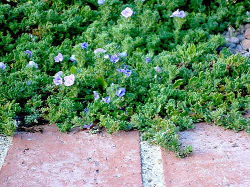 Ground Cover 20120212