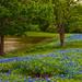 JVP_20120413_BluebonnetTrail7043